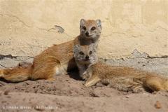 Tierpark_Stroehen_220814_copy_Heike_Weiler_IMG_5821
