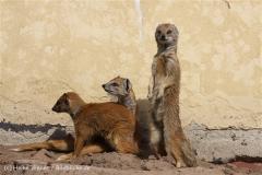 Tierpark_Stroehen_220814_copy_Heike_Weiler_IMG_5827