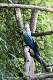 Tierpark_Stroehen_220814_copy_Heike_Weiler_IMG_5832