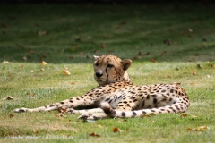 Tierpark_Stroehen_220814_copy_Heike_Weiler_IMG_5840