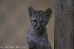 Tierpark_Stroehen_220814_copy_Heike_Weiler_IMG_5881