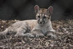 Tierpark_Stroehen_220814_copy_Heike_Weiler_IMG_6019
