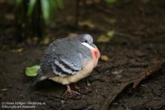 Weltvogelpark_Walsrode_070917_IMG_0590