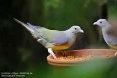 Weltvogelpark_Walsrode_070917_IMG_0591