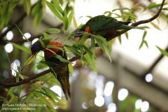 Weltvogelpark_Walsrode_070917_IMG_0600