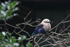 Weltvogelpark_Walsrode_070917_IMG_0606