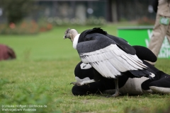 Weltvogelpark_Walsrode_070917_IMG_0621