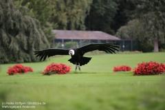 Weltvogelpark_Walsrode_070917_IMG_0647
