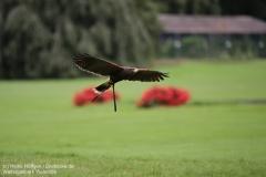 Weltvogelpark_Walsrode_070917_IMG_0670