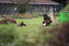 Weltvogelpark_Walsrode_070917_IMG_0702