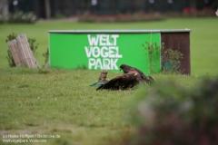 Weltvogelpark_Walsrode_070917_IMG_0705