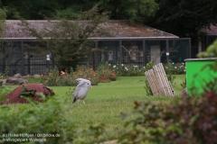 Weltvogelpark_Walsrode_070917_IMG_0725