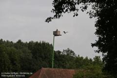 Weltvogelpark_Walsrode_070917_IMG_0761