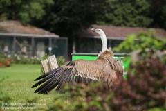 Weltvogelpark_Walsrode_070917_IMG_0771