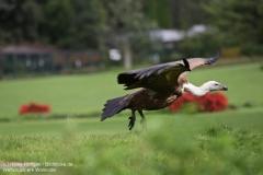 Weltvogelpark_Walsrode_070917_IMG_0796