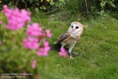 Weltvogelpark_Walsrode_070917_IMG_0853