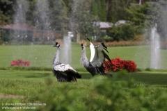 Weltvogelpark_Walsrode_070917_IMG_0865