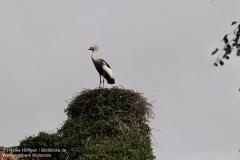 Weltvogelpark_Walsrode_070917_IMG_0913