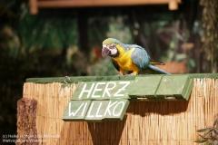 Weltvogelpark_Walsrode_070917_IMG_0915