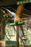 Weltvogelpark_Walsrode_070917_IMG_0943