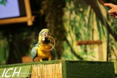 Weltvogelpark_Walsrode_070917_IMG_0966