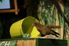 Weltvogelpark_Walsrode_070917_IMG_0996