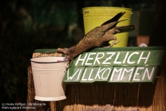 Weltvogelpark_Walsrode_070917_IMG_1022