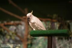 Weltvogelpark_Walsrode_070917_IMG_1073