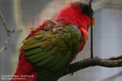 Weltvogelpark_Walsrode_070917_IMG_1086
