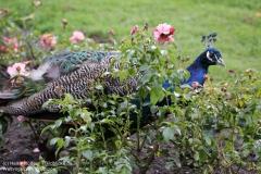Weltvogelpark_Walsrode_070917_IMG_1101