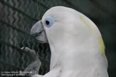 Weltvogelpark_Walsrode_070917_IMG_1102