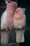 Weltvogelpark_Walsrode_070917_IMG_1107