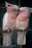 Weltvogelpark_Walsrode_070917_IMG_1108