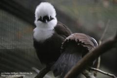 Weltvogelpark_Walsrode_070917_IMG_1113