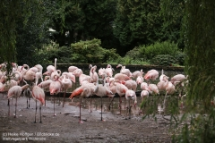 Weltvogelpark_Walsrode_070917_IMG_1283