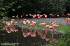 Weltvogelpark_Walsrode_070917_IMG_1342