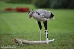 Weltvogelpark_Walsrode_070917_IMG_1186