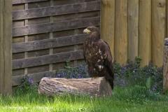 Wildpark-Lueneburg-230510-IMG_1210
