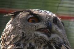 Wildpark-Lueneburg-230510-IMG_1220-2