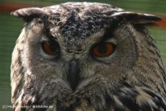 Wildpark-Lueneburg-230510-IMG_1222