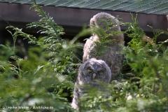 Wildpark-Lueneburg-230510-IMG_1226