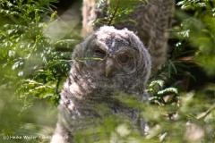 Wildpark-Lueneburg-230510-IMG_1230