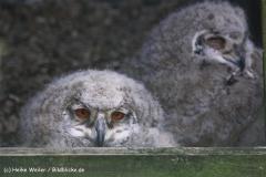Wildpark-Lueneburg-230510-IMG_1237