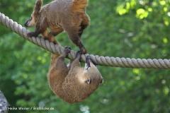 Wildpark-Lueneburg-230510-IMG_1304