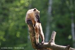 Wildpark-Lueneburg-230510-IMG_1307