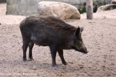 Wildpark-Lueneburg-230510-IMG_1331