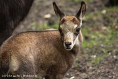 Wildpark-Lueneburg-230510-IMG_1358