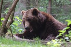 Wildpark-Lueneburg-230510-IMG_1384