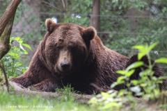 Wildpark-Lueneburg-230510-IMG_1388