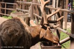 Wildpark-Lueneburg-230510-IMG_1469